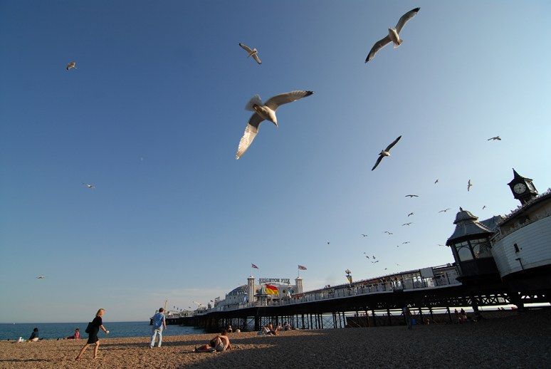 Seagulls dive bomb Brighton pier in the U.K