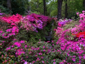 The Isabella Plantation Richmond park