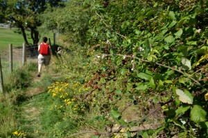 Blackberries on the trail.