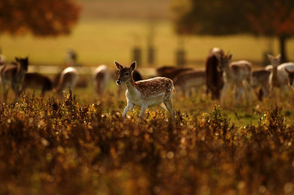 Kd deer rut 2009 16