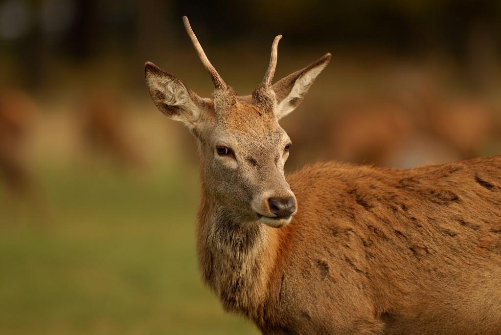 Kd deer rut 2009 17