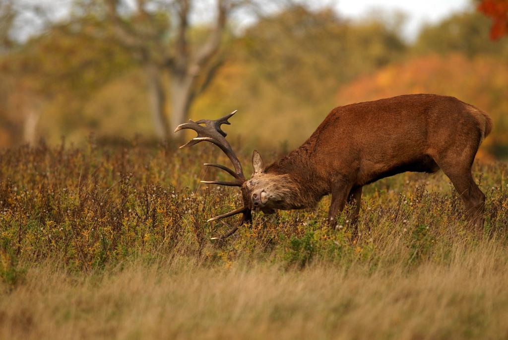 Kd deer rut 2009 19