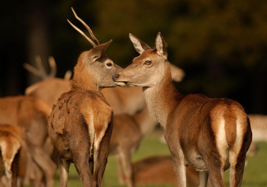 Kd deer rut 2009 25