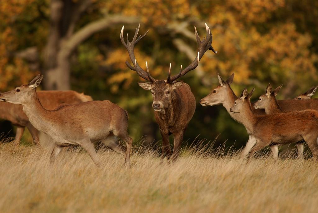 Kd deer rut 2009 28