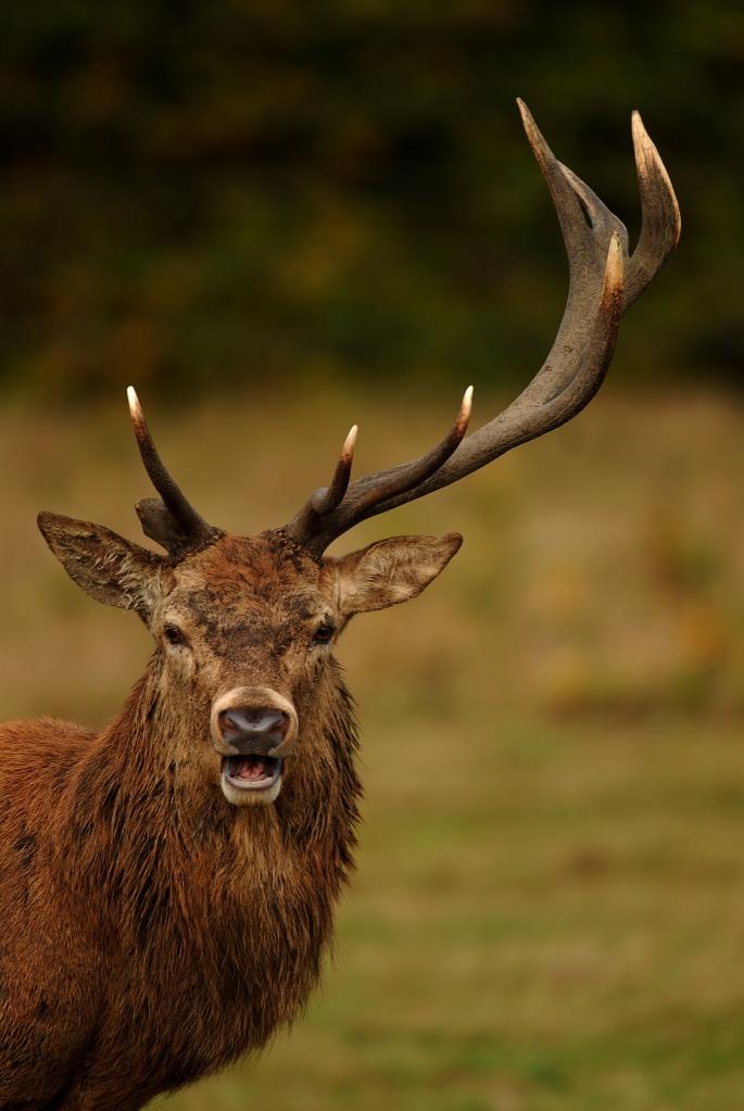 Kd deer rut 2009 31