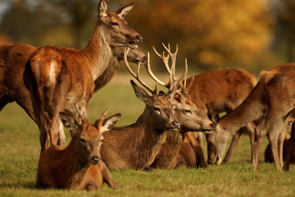 Kd deer rut 2009 33