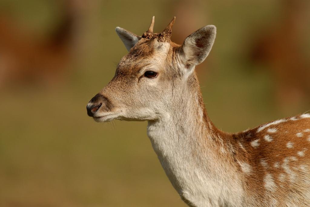 Kd deer rut 2009 34