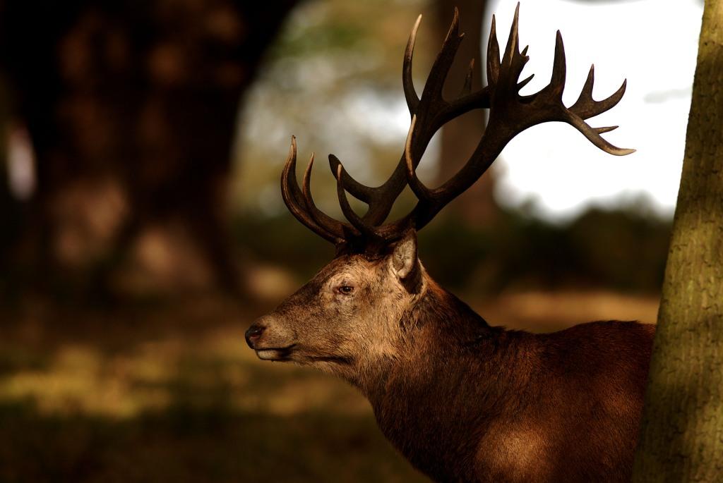 Kd deer rut 2009 35