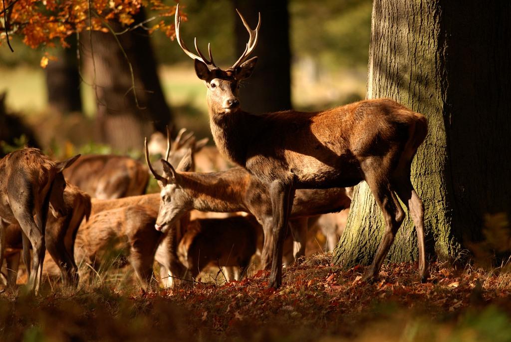 Kd deer rut 2009 36