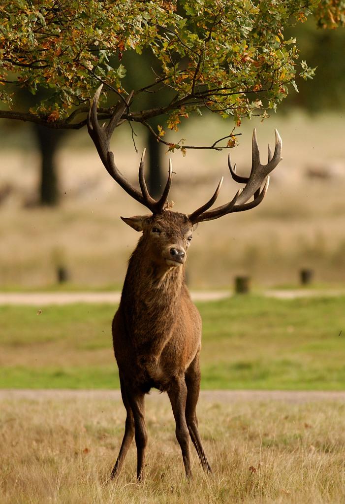 Kd deer rut 2009 40