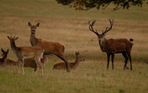 Kd deer rutt 12