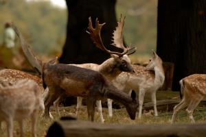 Kd deer rutt 13