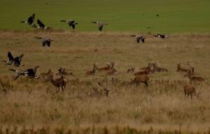 Kd deer rutt 14