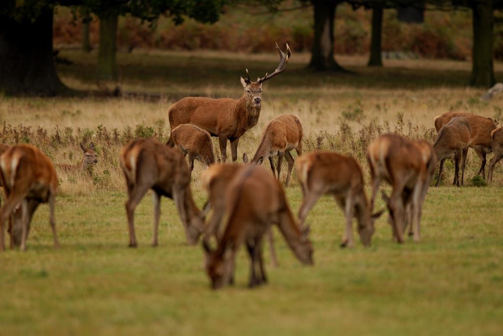 Kd deer rutt 2