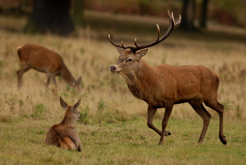 Kd deer rutt 3