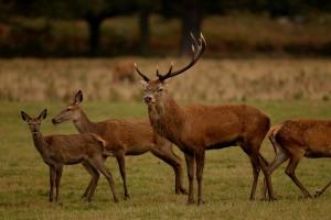 Kd deer rutt 7