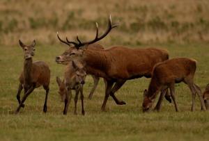Kd deer rutt 8