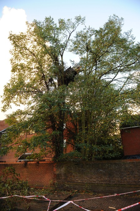 INS_Hounslow_House_Hit_By_Tree_47